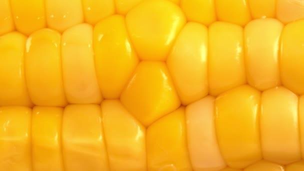 Makro pohled na čerstvou surovou kukuřici.