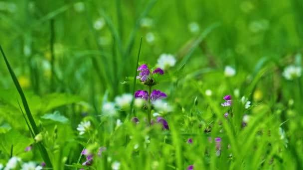 Jarní květiny v husté trávě