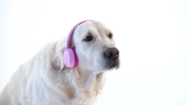 Love of music - funny portrait of a dog with headphones on white background