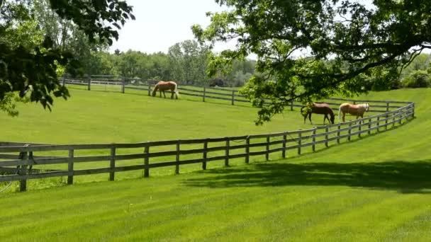 Koně, krmení na svěží zelené louce na koňské farmě