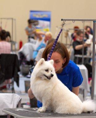 Groomer is cutting a dog hair.