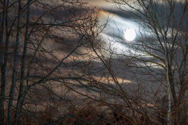 Night sky and moon through tree branches