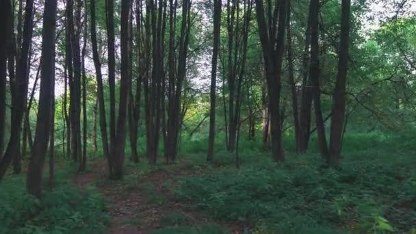 Teplý letní večer v lese