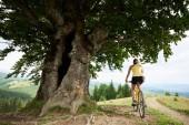 Hát Nézd, vonzó nő kerékpáros nagy fa alatt, sárga hegyi kerékpár lovaglás élvezi a nyári nap a hegyekben. Szabadtéri sporttevékenység, életmód fogalma