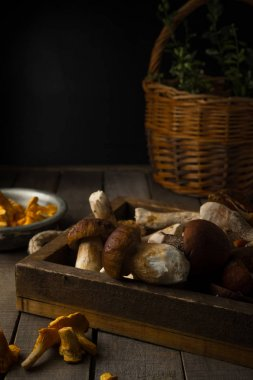 Fresh uncooked forest mushrooms on rustic wooden background, front view, vertical orientation