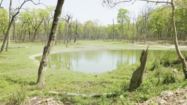Lake with crocodile in rainforest in the national park Chitwan, Nepal.