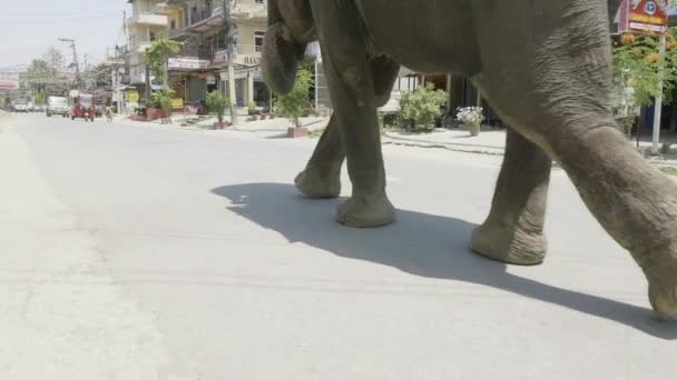 Slon chodí na ulici města v Asii.