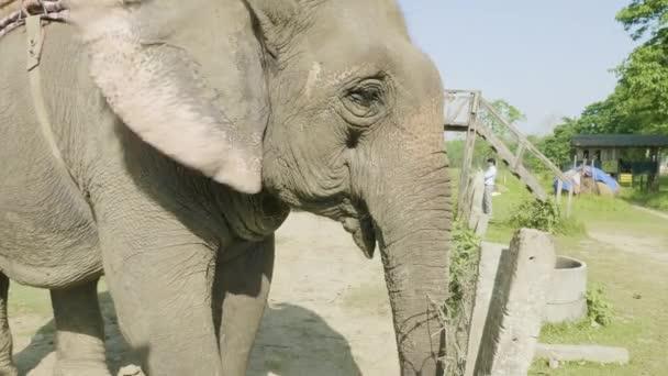 Elefánt arc, a nemzeti park, Chitwan, Nepál.