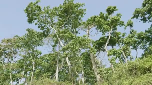Rainforest in the national park Chitwan, Nepal