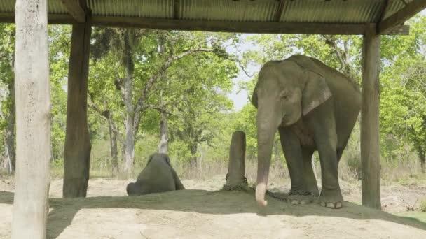 Baby elefánt az anya, a farm, nemzeti park, Chitwan, Nepál.