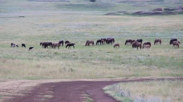 Stádo koní na venkovské silnici. Koně