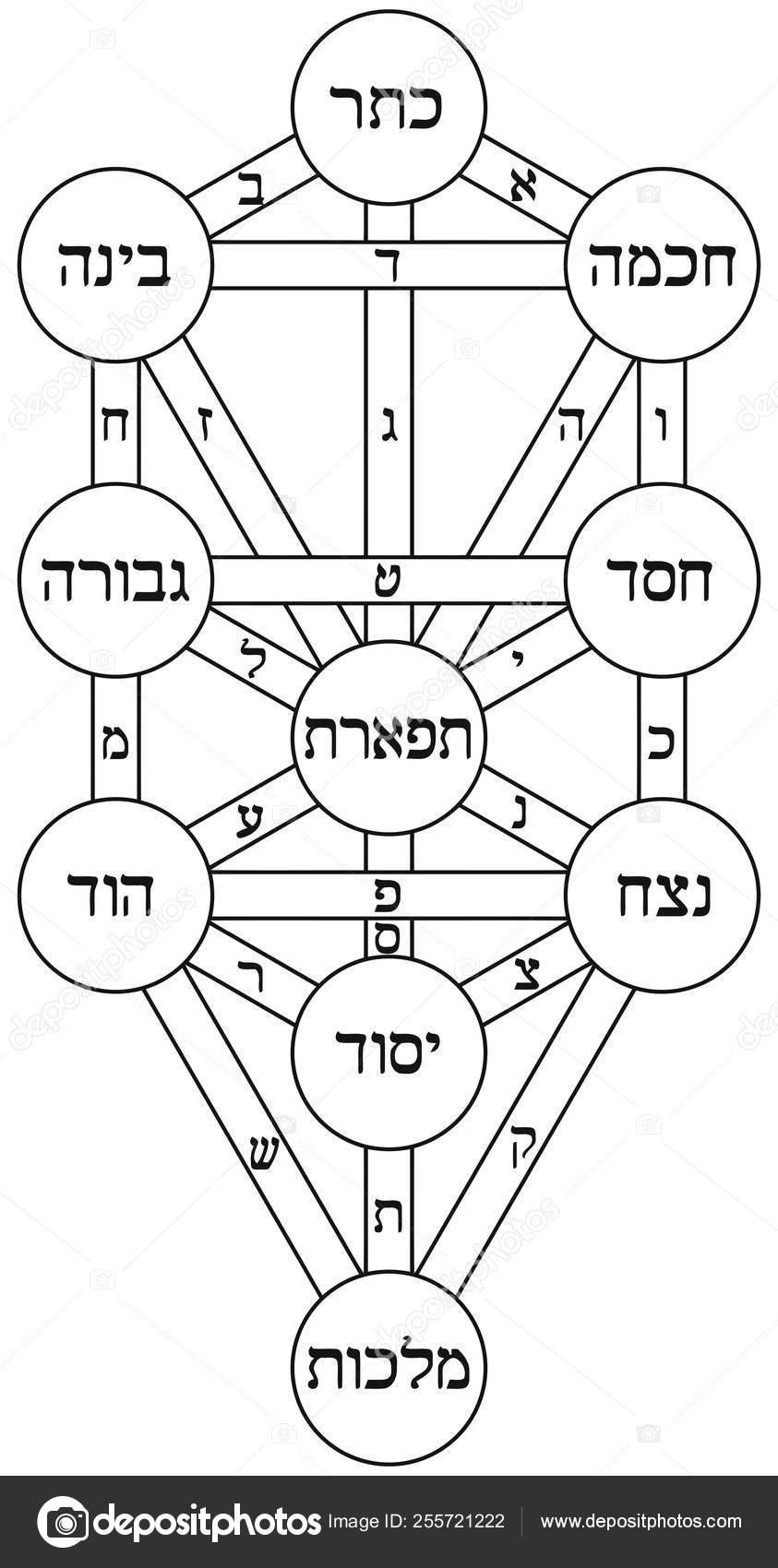 Tree Of Life From Kabbalah : Its basic design is based on descriptions given in the sefer yetsirah, or book of creation, and since man is invested with mind, consciousness in the kabbalah is thought of as the fruit of the physical world, through whom the original infinite energy can.