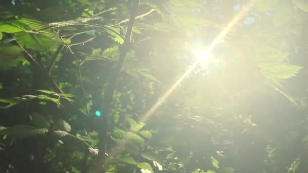 Enchanting sun rays beautiful illuminating a beech forest in vivid shades of fresh green, slow motion shot