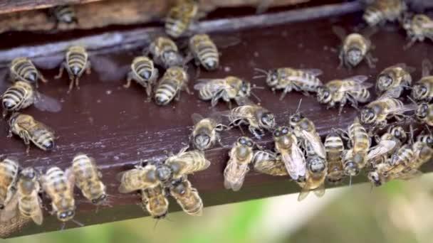 Včely nektar proměnit medu detail Bee Flying včelí plástev úl, med, včelín makro