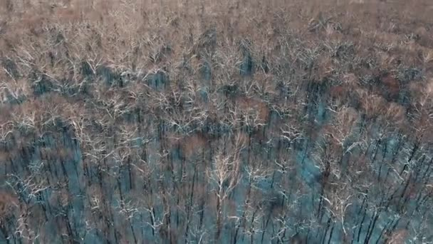 Aerial 4k view Flying over a snowy forest in winter in snowfall, amazing frosty weather