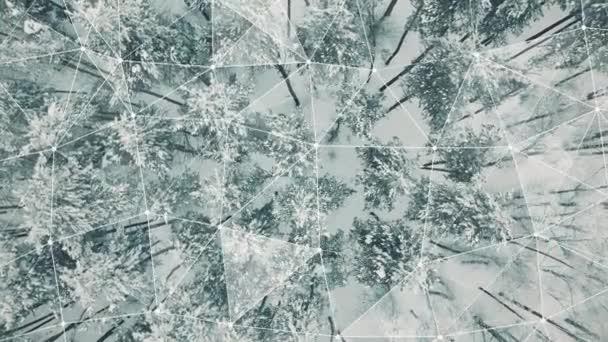 4k Luftaufnahme von oben nach unten Überführung von Fichten- und Kiefernwald im Winter. die Bäume sind mit Schnee bedeckt und ein Verbindungsnetz, das Konzept der Verbindungen zwischen Wäldern und Bäumen