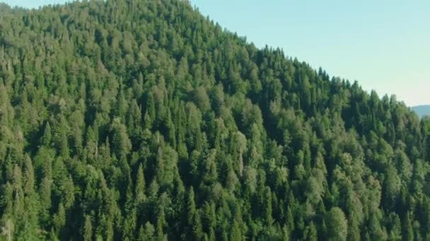 Aerial 4k megtekintéséhez halad előre fenyőerdők erdő és hegyi völgyben napkitörés a nyári napon. Kültéri zöld természet Scape hegyek vad légi establisher. Drone repülés létrehozó lövés