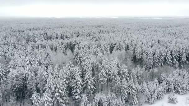 4K. Repülés a téli erdő felett északon, légi kilátás.