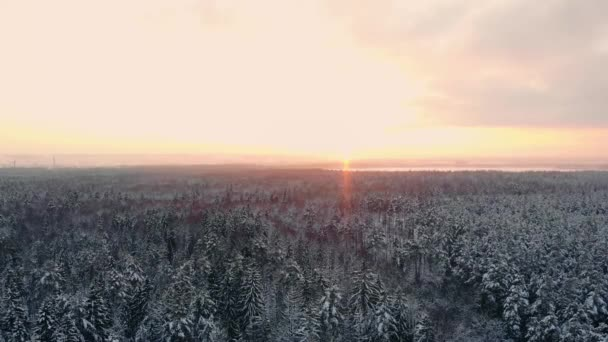 Aerial view on the forest hills during winter sunset. Crowns of coniferous trees are lighted up by a bright setting sun.