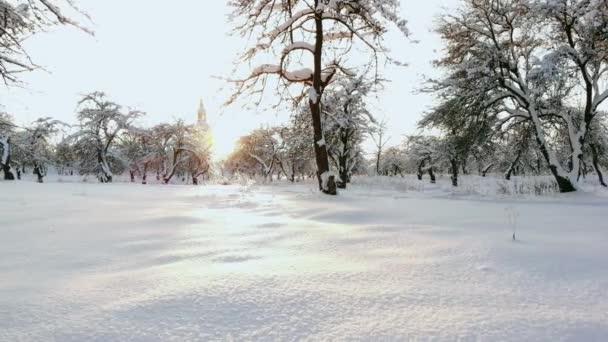 Letecká úzké se létání nad zmrazené stromů v zasněžené smíšeného lesa na mlhavé svítání. Zlaté slunce, které vychází za ledovým smíšený les zabalené v ranní mlha a sníh v chladné zimě. Nádherné zimní krajina