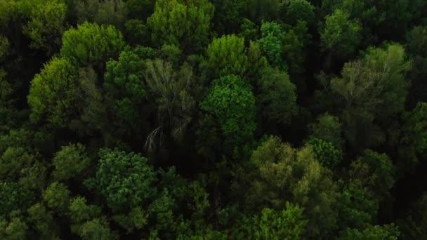 Aerial felülnézeti erdő, textúra az erdő kilátás felülről.