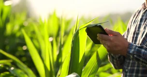 Blízká: v případě, že se počítač s tabletovým počítačem seznámit s dalšími rostlinami v polích na moderním statku při západu slunce.