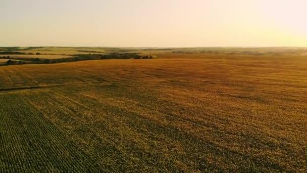 Letecká fotografka při západu slunce, pšenice pole, zelená pole, pole slunečnic a kukuřice. Zemědělství.