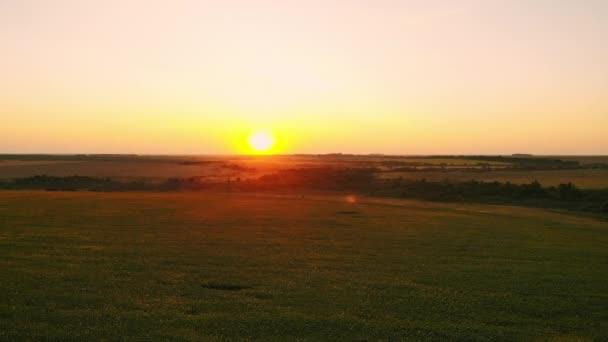 Letecká fotografie slunečnicová pole při západu slunce. Zelená slunečnicová pole s ptačí pohled