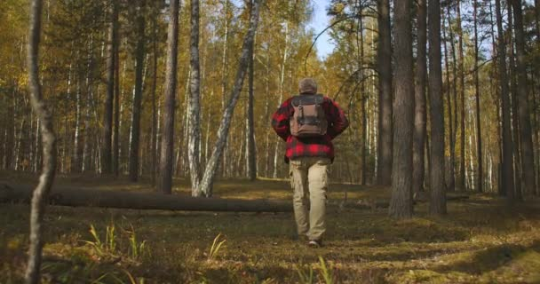 trekking of alone tourist in forest at autumn day, back view of male figure with backpack, unity of human and nature
