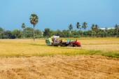 rýže, rýžové pole, modrá obloha, Srí Lanka