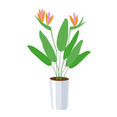 """Картина, постер, плакат, фотообои """"стрелиця - большое домашнее растение в цветочном горшке. зеленые листья и ярко-оранжевые с розовыми цветками. домашний рост - экологически чистое хобби. векторная иллюстрация на белом фоне."""", артикул 394486916"""