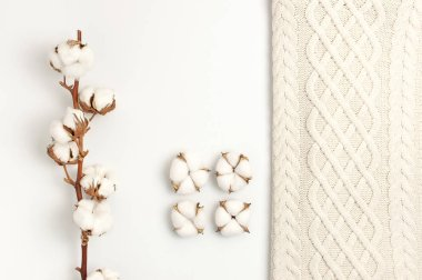 Flat lay autumn composition. Knitted woolen light beige sweater or plaid, cotton flowers on white background top view copy space. Autumn, fall concept. Knitwear texture