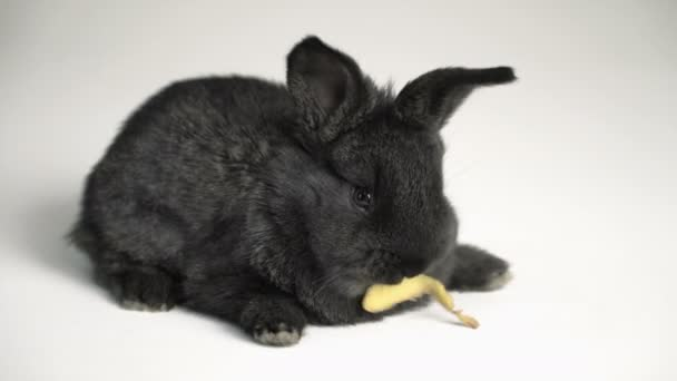králík nebo zajíčka na bílém pozadí
