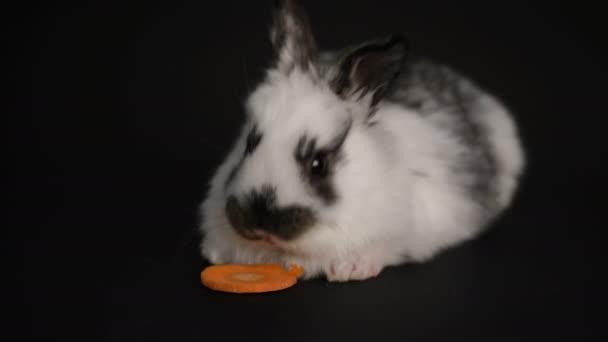 Kaninchen oder Hase auf schwarzem Hintergrund