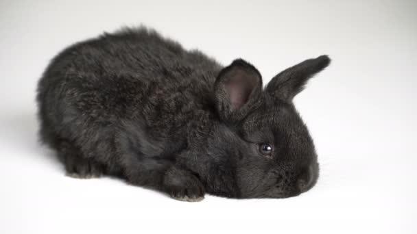 Kaninchen oder Hase auf weißem Hintergrund