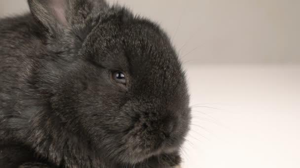 malý králík nebo králíček zblízka