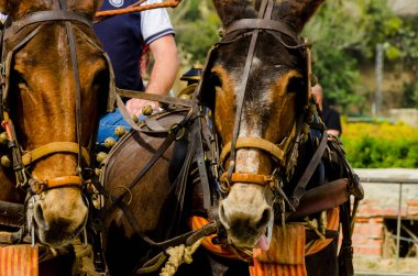 ALMAYATE, SPAIN - APRIL 22, 2018 Traditional Andalusian contest based on the presentation of the ability to drive horse with a cart, professional work of carters with horses