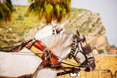 Closeup on horses in a harness during a riding show in a tourist town