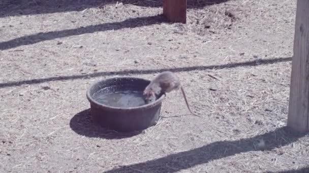 Fangen Sie Maus Auf Urban Farm
