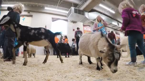Petting zoo at the Western Stock Show
