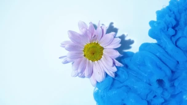 Colorful blue ink flows on a pink flower in water