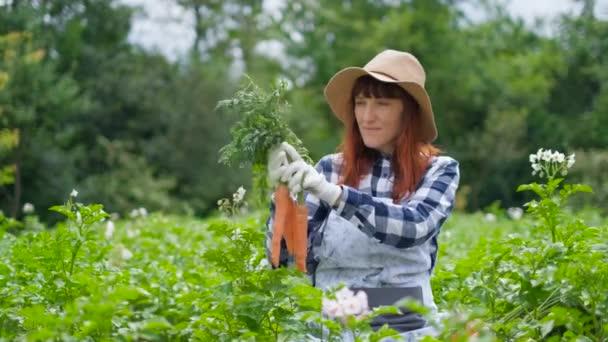 Portrétní žena s organickou mrkví v zeleninové zahradě.