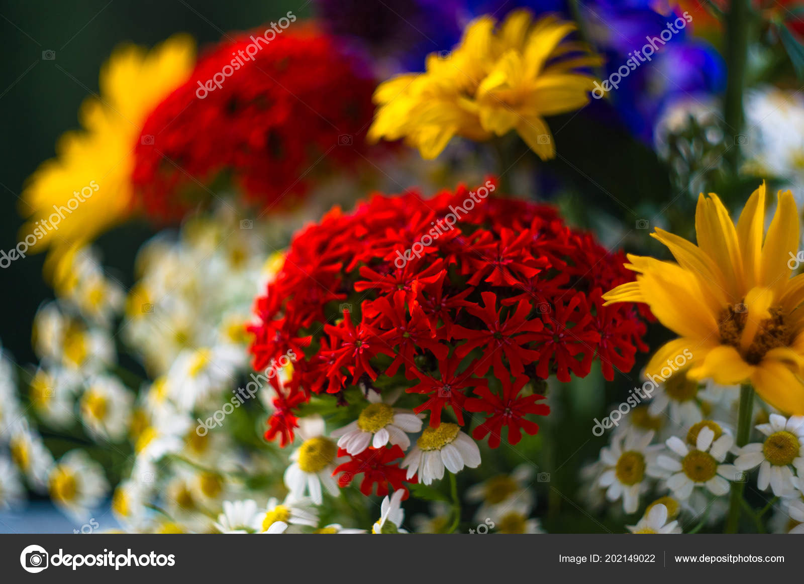 Colorful bouquet bright spring flowers various types close stock a colorful bouquet of bright spring flowers of various types close up photo by wingedbull mightylinksfo