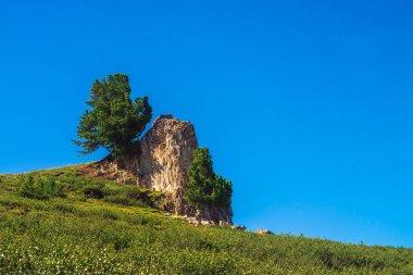 """Картина, постер, плакат, фотообои """"удивительный кедр растет на красивом каменистом камне на зеленом холме в солнечный день. богатая растительность высокогорья под голубым небом. ветви хвойных деревьев сияют солнцем. невообразимый горный пейзаж . фото"""", артикул 265220488"""