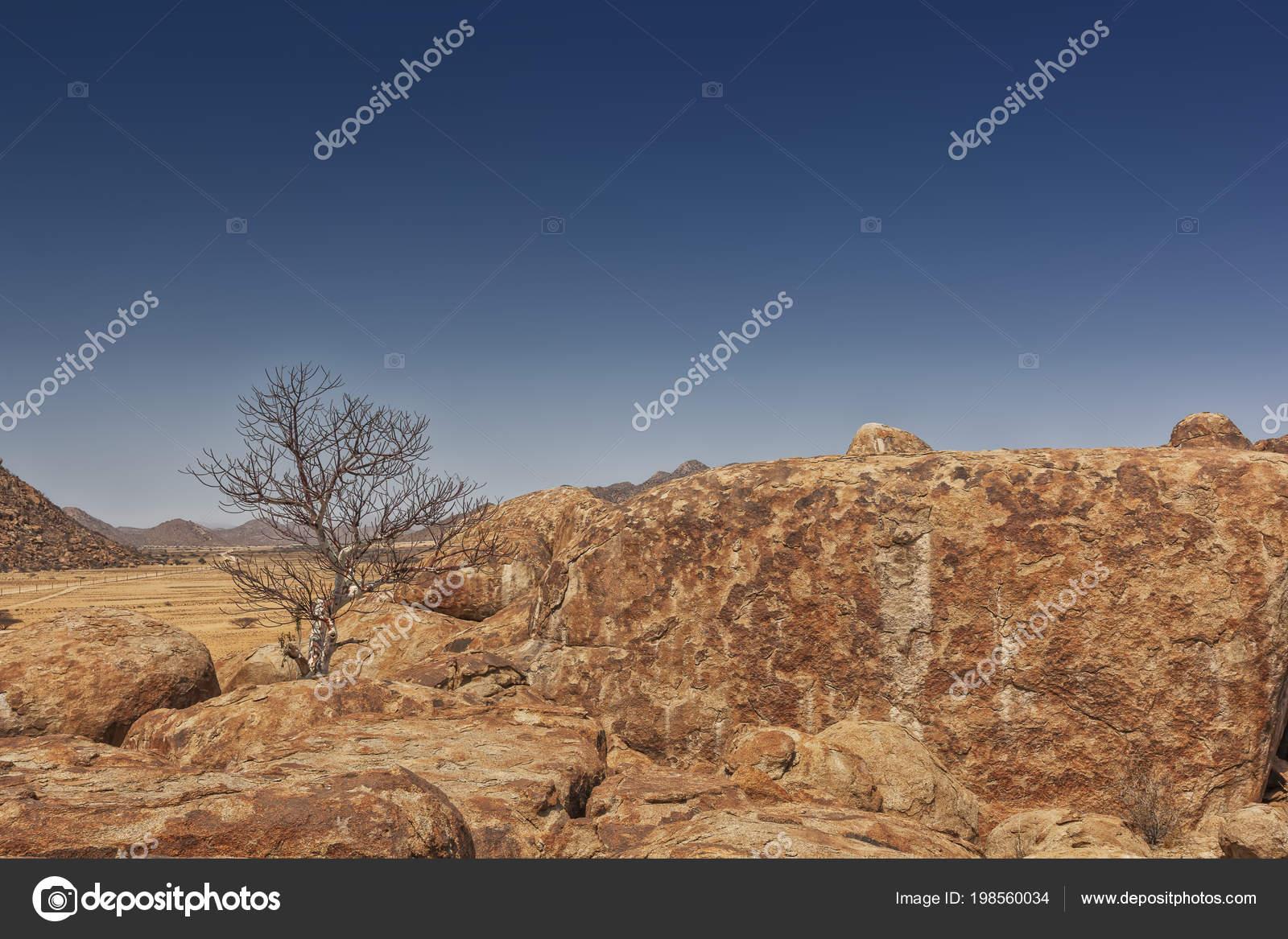 巨大な石 ナミベ砂漠の乾燥木 ア...