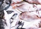 Fotografie Pták dorado ryba na ledu pozadí na trhu, closup z čerstvých mořských produktů, užitečné dietní Chřestová sezóna v restauraci, izolované skupiny ryb s lesklé šupiny, zmrazené mořské plody po lovu rybáři
