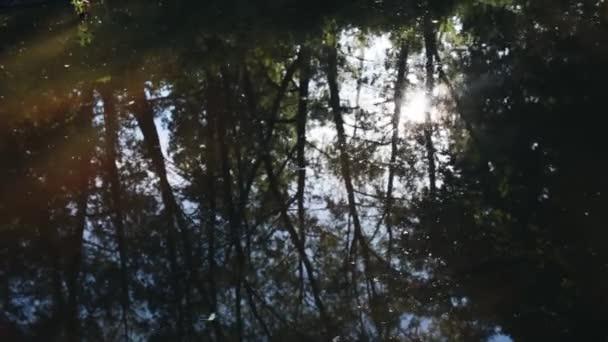 stromy a slunce se odrážejí ve vodě pomalé Lesní řeky.