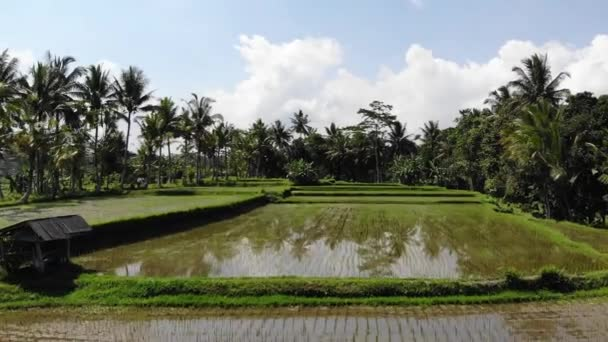 4K Aerial drone video in an amazing landscape rice field on Bali island. 4K drone footage.