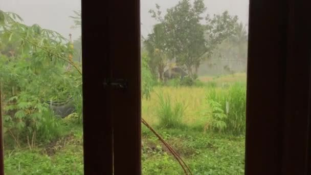 Man hand opening the window with amazing tropical green background and fresh rain. Bali island.