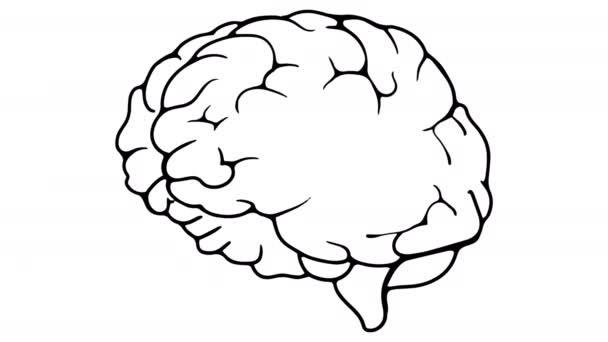 Animace Mozkové tabule 4k záběry